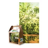 Tela De Gasa, Iguazú - Gabriela Celano - Cultura De La Selva