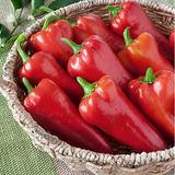 Sementes Pimenta Doce Italiana Deliciosa Suave Sem Picância