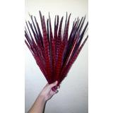 45 Pzas Faisan Rojo 40-45 Cm