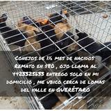 Remate De Conejos , Varias Razas En Queretaro, Capital