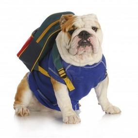2x1 Mega Pack De Adiestramiento Canino Veterinaria Estetica