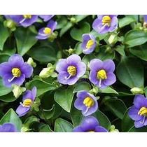 Violeta Alemana (paq De 6 Pz Flores Pequeñas De Dif. Tipos)