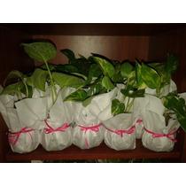 Plantas Kokedamas Desde $ 80!