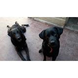 Doy Dos Perros Por Falta De Espacio