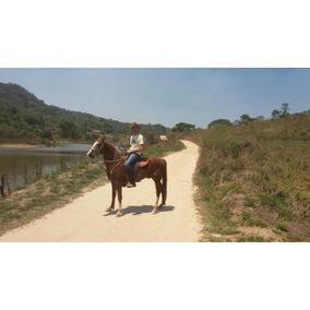 Cavalo Mangalarga Marchador Sem Registro