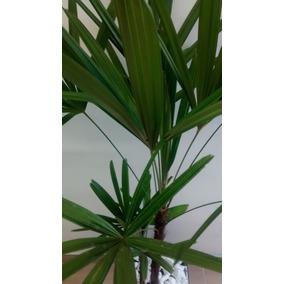 Palmeira Para Salão De Beleza Vaso De Vidro E Rodinhas