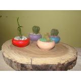 macetas miniatura mini jardines recuerditos