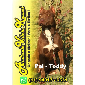 Filhote De American Pit Bull Terrier