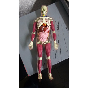 Cuerpo Humano Hombre Transparente Armable + Tomos