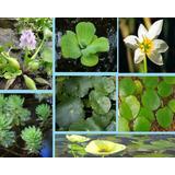 Combo De Plantas Nativas Acuáticas Para Estanques
