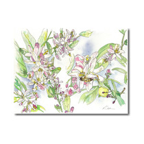 Arte Impreso Katie Dunkle, Meyer Lemon Blossoms, 30 X 40