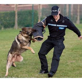 Adestramento De Cães, Para Todos Os Cachorro Em 3 Dvds C5i