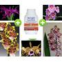 Kit Enraizador 500ml + 11 Mudas De Orquídeas Mistas Adultas