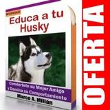 Guía De Entrenamiento Para Perro Husky Siberiano 2