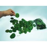 350 Folhas Naturais Secas - Nªº Artificial Pacote Decoração