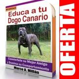 Como Educar A Un Dogo Canario - Guía De Adiestramiento 3