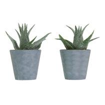 Jgo De 2 Plantas Artificiales Mini Maguey Biasi
