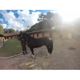 Vendo Lindo Cavalo Crioulo Registrado Curitiba/pr