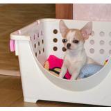 Hermosos Chihuahua Padres Presentes De Casa Miraflores