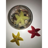 Vela Estrella De Mar Flotantes (por Encargue)