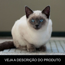Gato Siamês - Tudo Sobre A Raça (frete Grátis) Promoção!