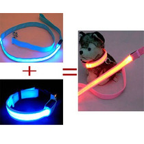 Correa Y Collar Led Kit Completo Color Mascota Perro Tallas