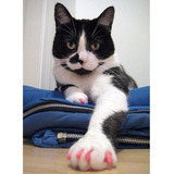 Kit Protectores Uñas Para Gato