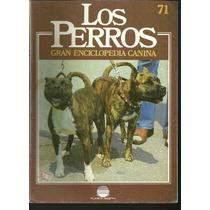Enciclopedia Canina Perro Terrier Americano Canada 71