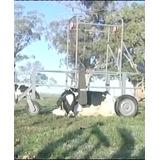 Pluma Levanta Vacas