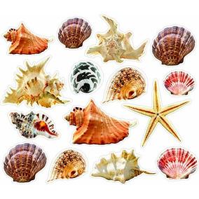 Conchas Y Estrellas De Mar En Mercado Libre Mexico - Fotos-de-conchas-de-mar