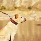 Collares De Perro De Cuero Genuino Para Pit Bull Mastin