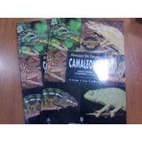 Camaleones, Manual Del Terrario. Schmidt. Hispano Europea