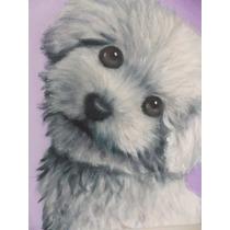 Cuadro De Caniche O Retrato De Tu Mascota