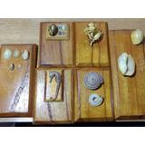Coleccion De Caracoles Marinos, Caballito De Mar Malacologia
