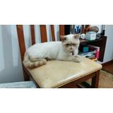 Hermoso Gato En Adopcion!!!