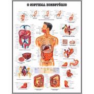 Poster Sistema Digestório 60x80cm Decorar Clínica Medicina