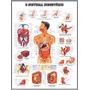 Mapa Sistema Digestório Hd 60x80cm Decorar Clínica Medicina