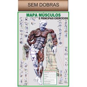 Banner Mapa Músculos E Principais Exercícios Sem Dobras