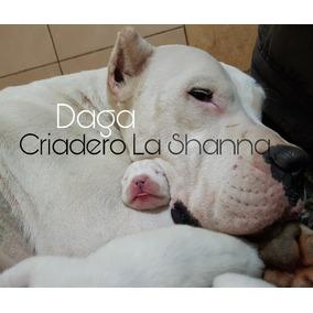 Dogos Argentinos Criadero La Shanna La Mejor Sangre + Poder