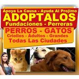 Gratis, Adopta Perros Y Gatos, Adopcion, Fundacion, Regalo,