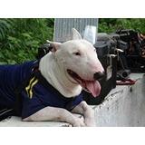 Bull Terrier Ingles Standar Para Monta