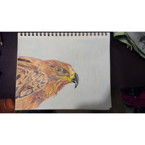 Dibujo Aguila Nacional, Tecnica Colores Escolares.