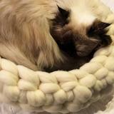 Hermosas Cuchas En Lana Merino Para Gatos