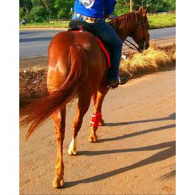 Cavalo Quarto De Milha Sem Registro