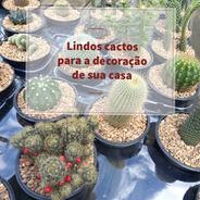 Mudas De Cactos Cactus Com Vaso Pote Número 11