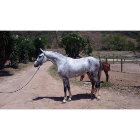 Vendo/troco Potro Magalarga Machador Registrado. Cavalo Top.