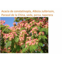 30 Semillas Acacia De Constatinopla, Albizia Julibrissin,