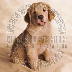 Golden Retriever Cachorros Machos100% Puros Criadero Premium