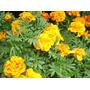 Copetes X 20 U Plantines Plantas De Exterior Elviveruski