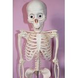 Esqueleto Humano Colección El Comercio